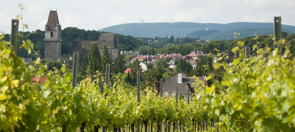 Blick über Weingärten mit Perchtoldsdorfer Wehrturm und Wienerwald im Hintergrund