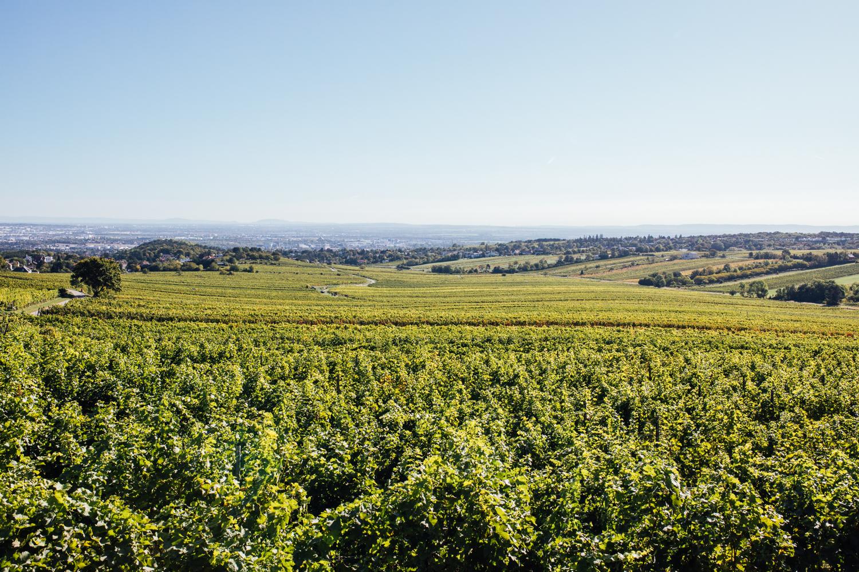 Panoramablick über die Riede Hagenau